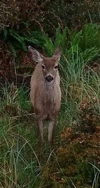 last deer