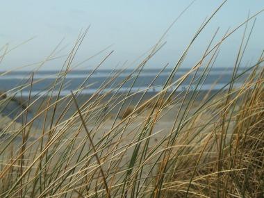 blowing dune grass.jpg